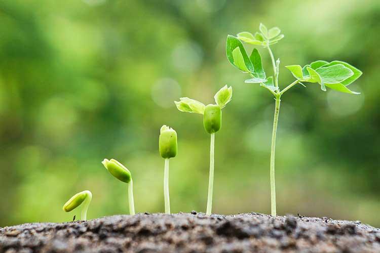 ZWAANZ   Better Living: Seeds For Africa (SAF)